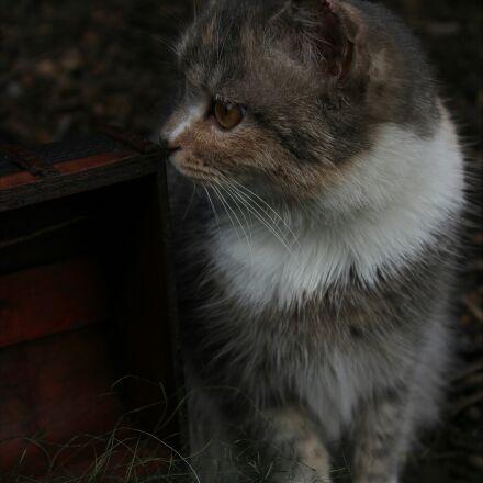 cat, love, animal, Canon EOS 1200D