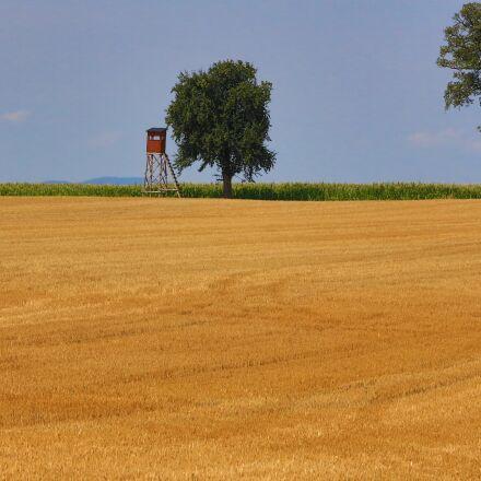 landscape, cornfield, nature, Canon EOS 5D MARK III