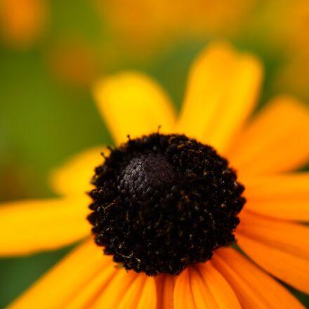 flower, macro, photography, Sony SLT-A58