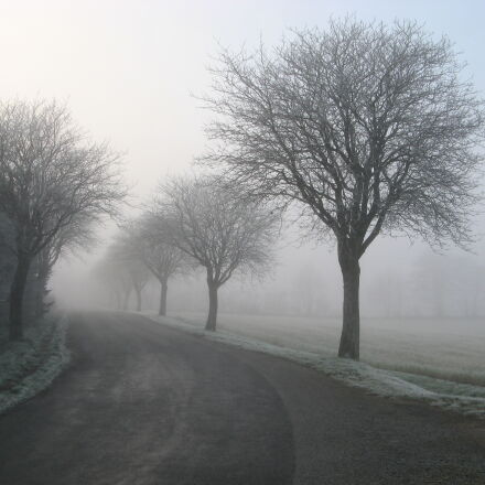 cold, countryside, field, foggy, Canon POWERSHOT A710 IS