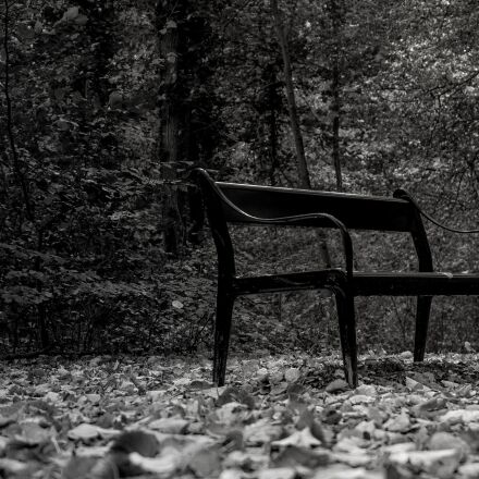 black and white, park, Sony ILCE-6000