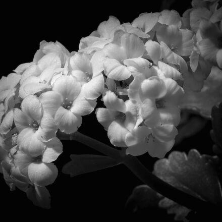 , Canon EOS REBEL T3I