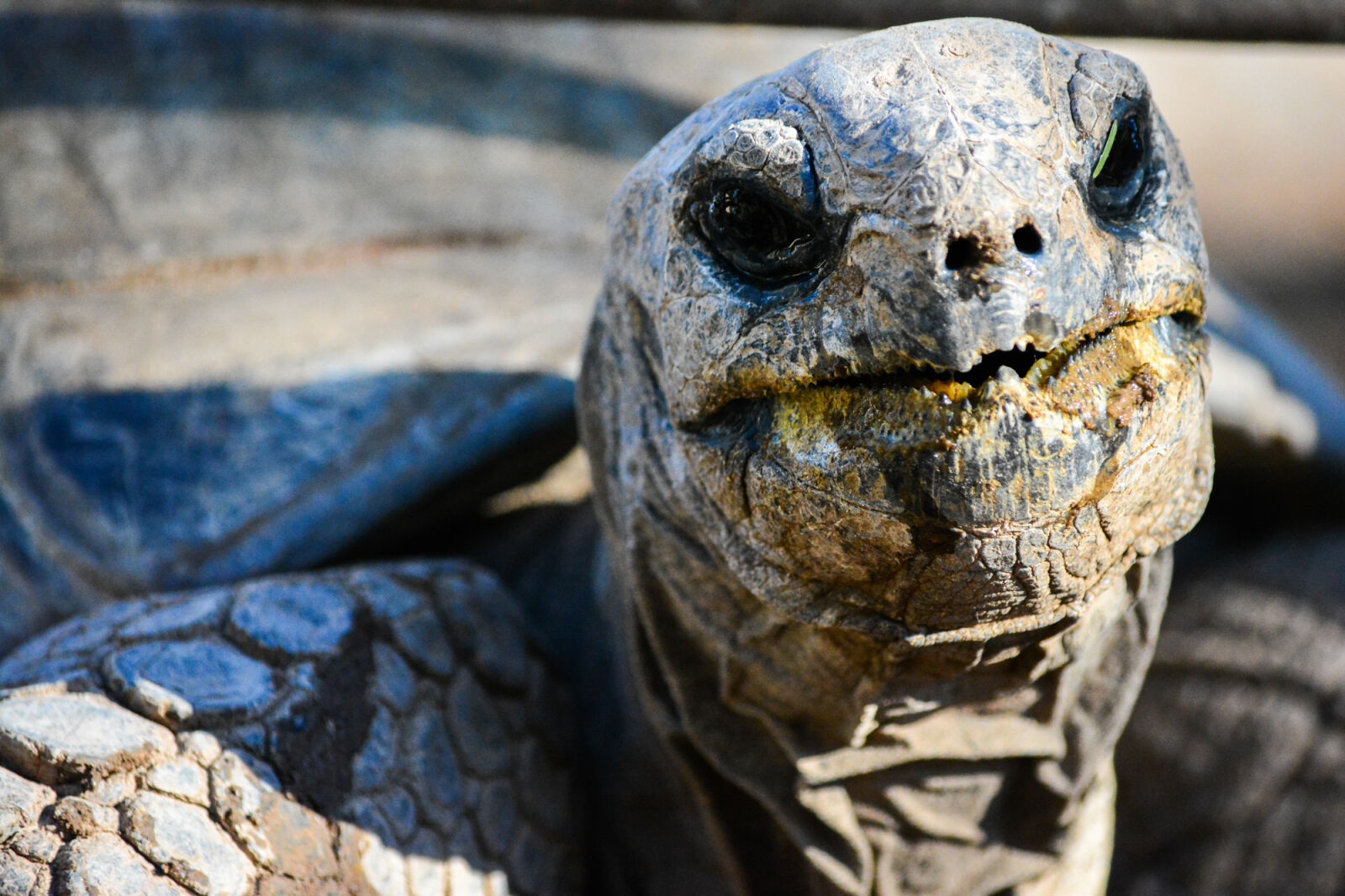 """Nikon D5200 sample photo. """"Africananimals, outofafrica, shell, tortoise"""" photography"""