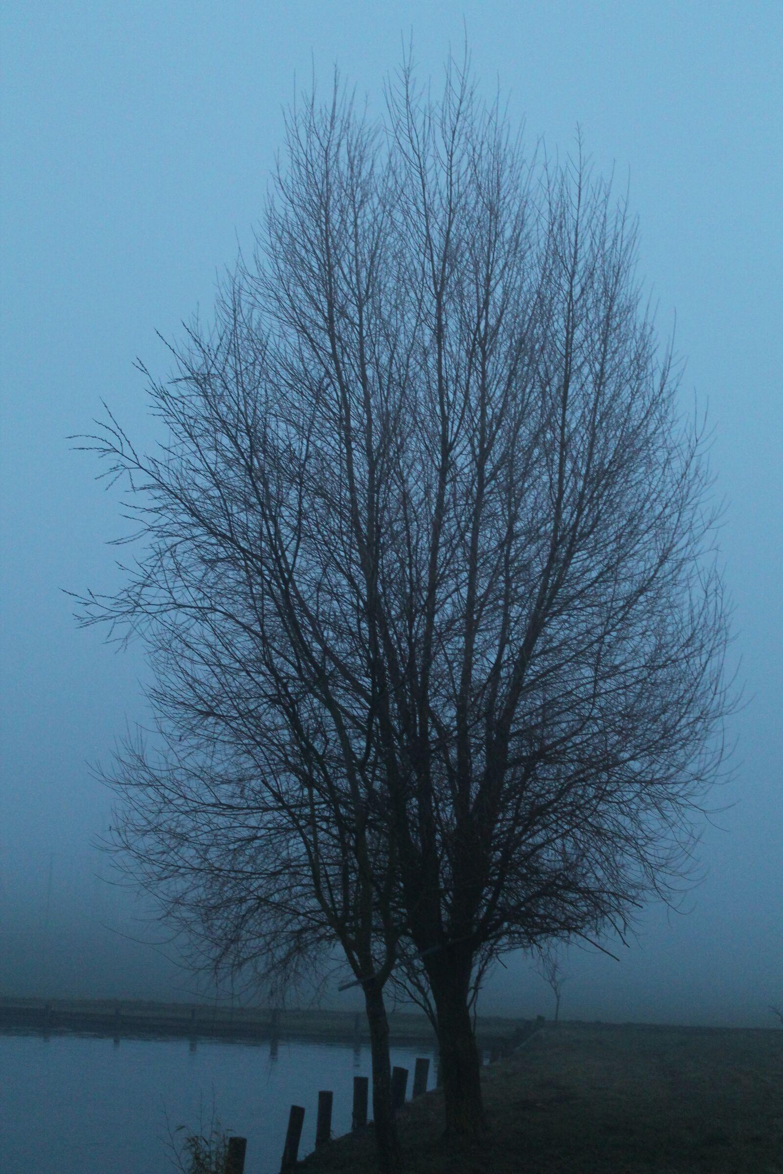 "Canon EOS 1100D (EOS Rebel T3 / EOS Kiss X50) sample photo. ""Fog, mystical, tree"" photography"
