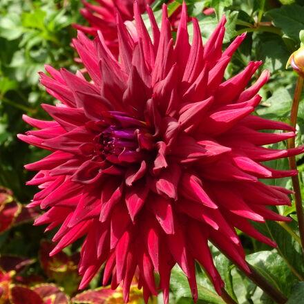 floral, flower, garden, park, Sony DSC-QX30