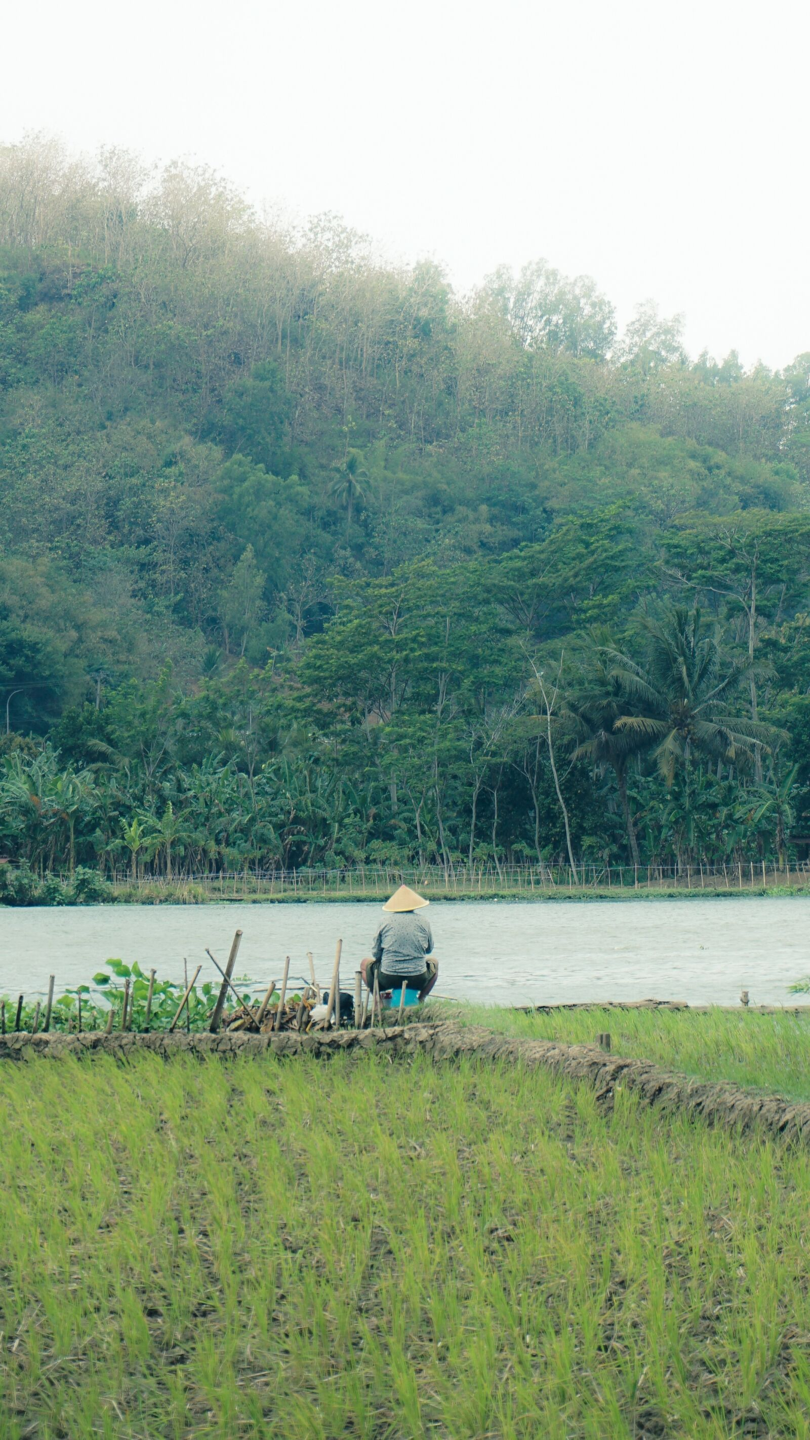 """Sony a6000 sample photo. """"Rice, field, river"""" photography"""