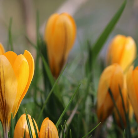 yellow, petaled, flower, with, Canon EOS 750D