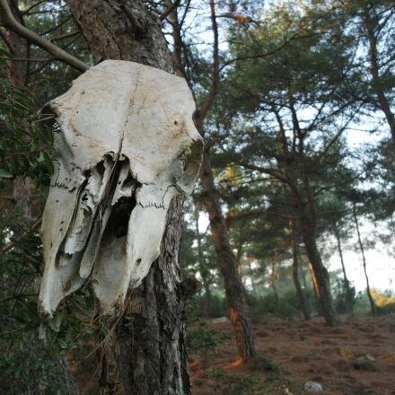 bone, forest, skeleton, skull, Samsung NX mini