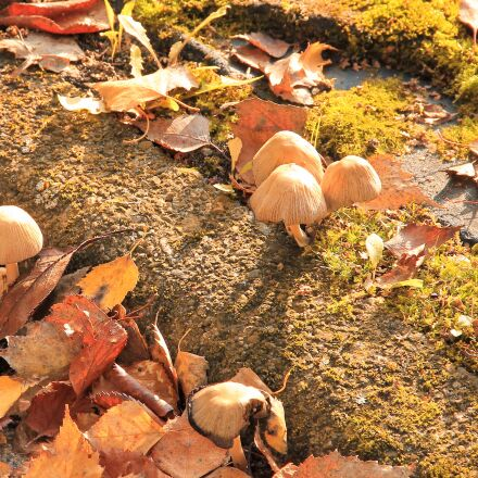 mushrooms, moss, leaves, Canon EOS 1100D