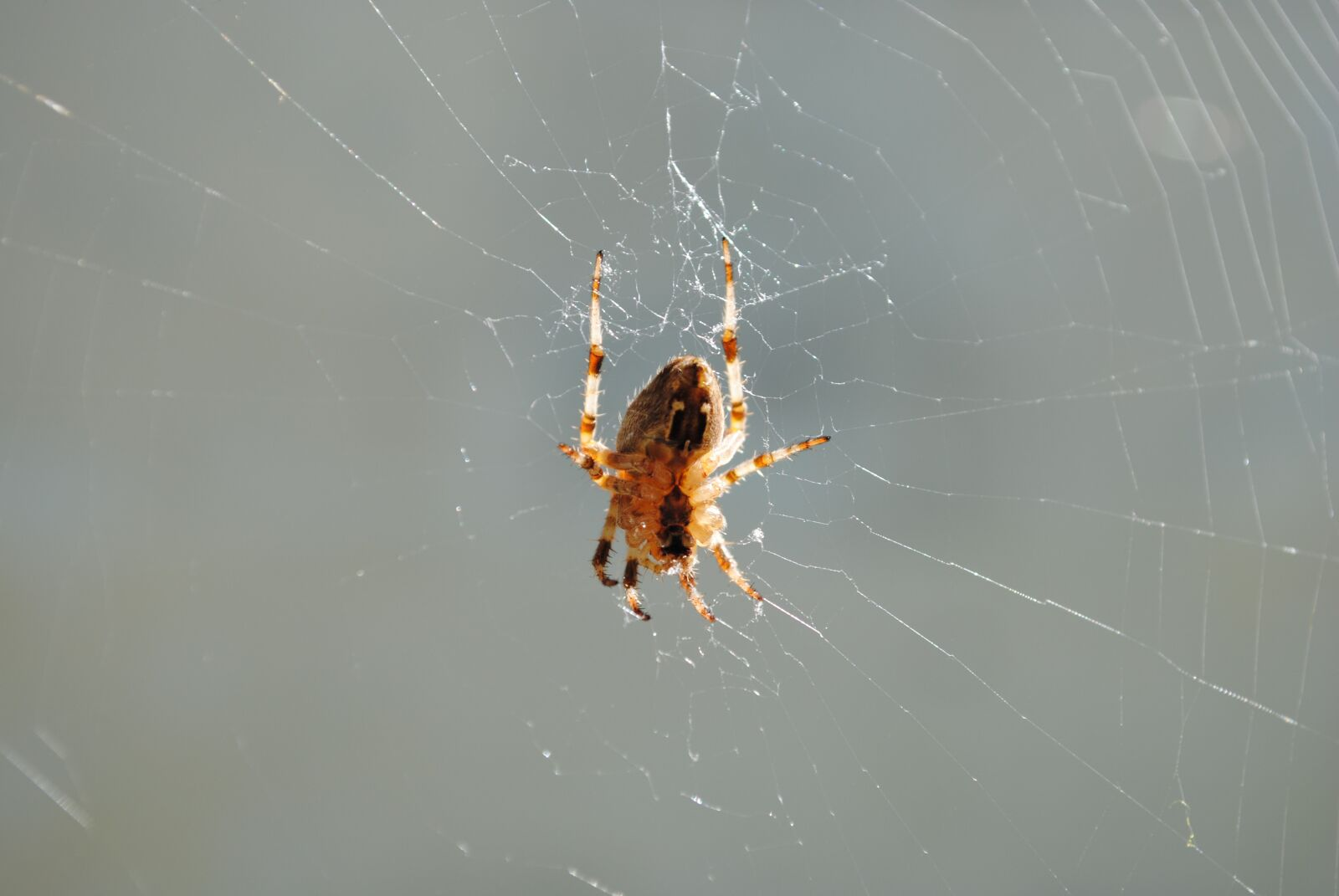 """Nikon D3000 sample photo. """"Spider, fauna, insect"""" photography"""