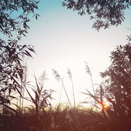 tree, nature, landscape, Panasonic DMC-GF2