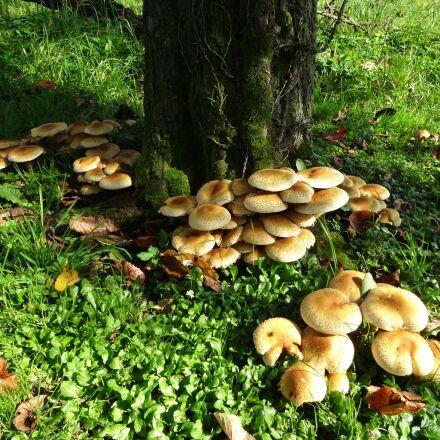 mushroom, forest, autumn, Sony DSC-WX300
