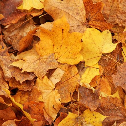 leaves, forest, autumn, Canon EOS 1100D