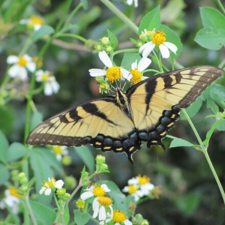 yellow, butterfly, nature, Canon POWERSHOT SX120 IS