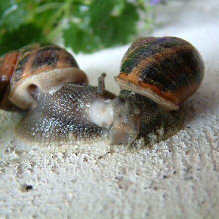 gastropod, snail, little grey, Fujifilm FinePix S602 ZOOM
