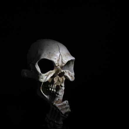 skull, horror, skeleton, Canon EOS 1100D