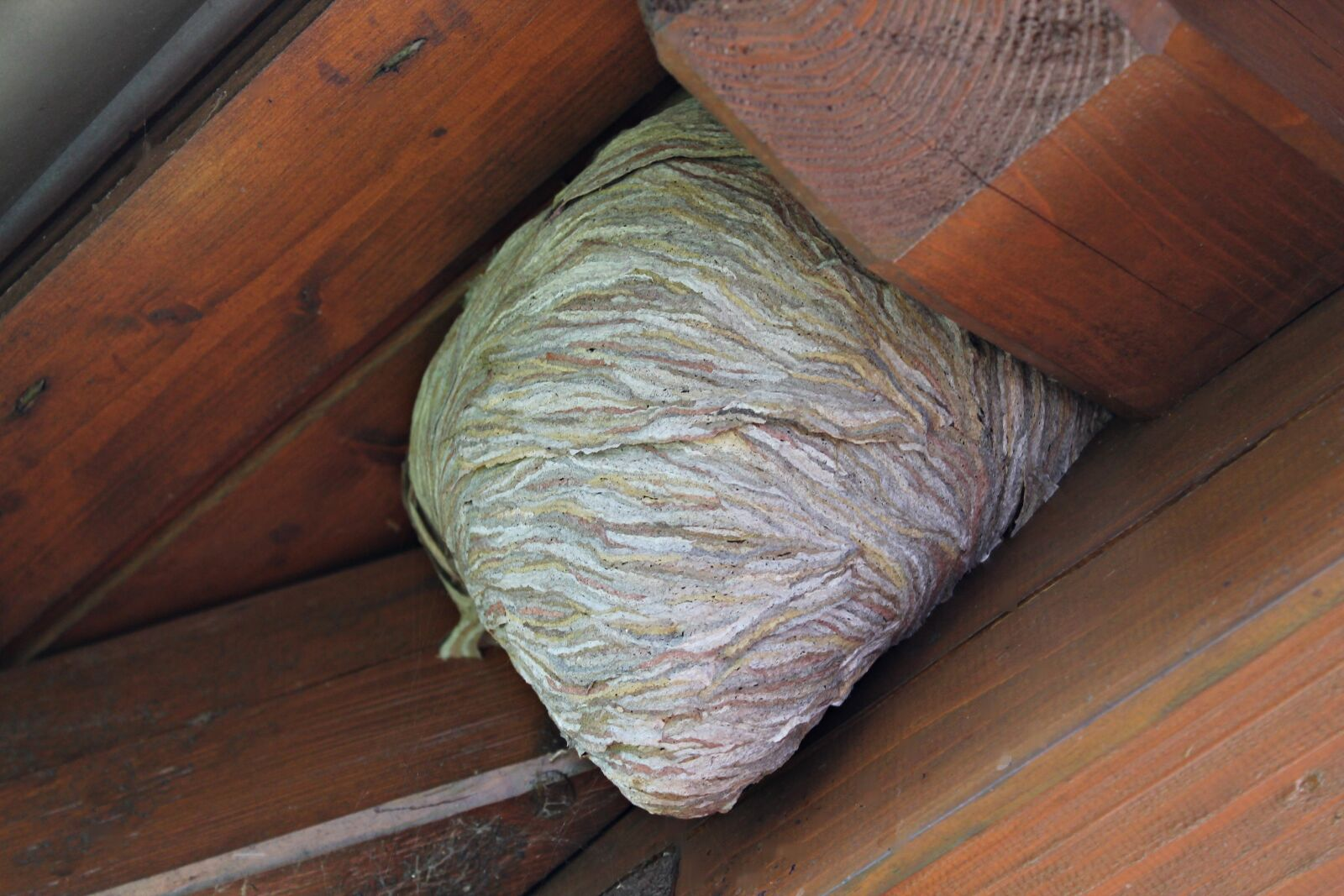 """Canon EOS 1100D (EOS Rebel T3 / EOS Kiss X50) sample photo. """"The hive, wasps dwelling"""" photography"""