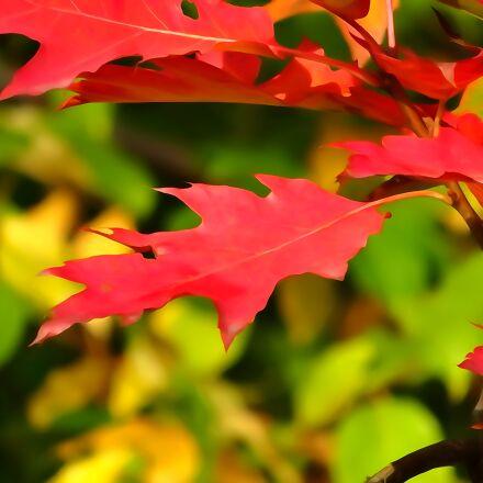 autumn, foliage, autumn gold, Sony DSC-WX300