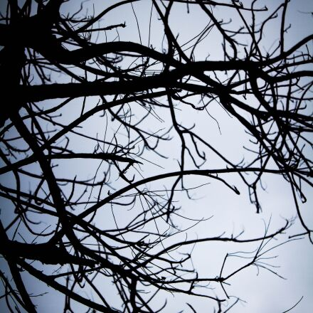 shadow, twigs, lonely, Canon EOS 7D