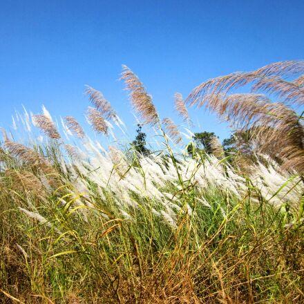 cambodia, grass, nature, Canon POWERSHOT A1200