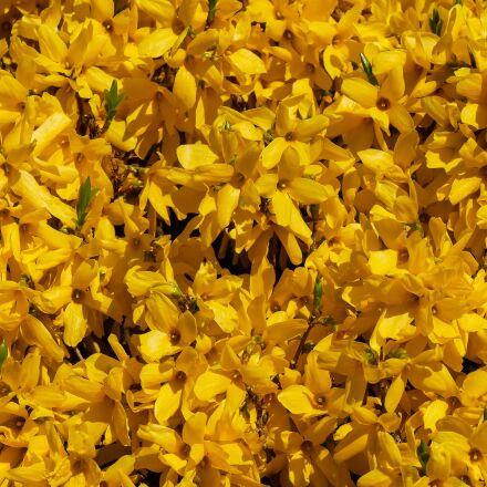 nature, flowers, spring, Panasonic DMC-G70