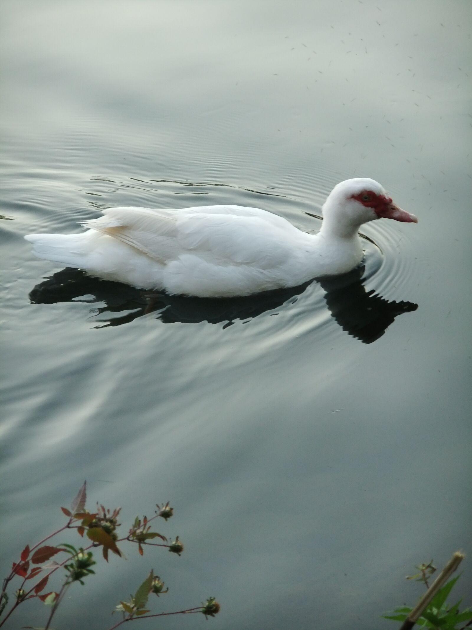 "FujiFilm FinePix JZ500 (FinePix JZ505) sample photo. ""Duck, nature, water"" photography"