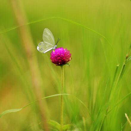 butterfly, flower, purple, flowers, Nikon D5200