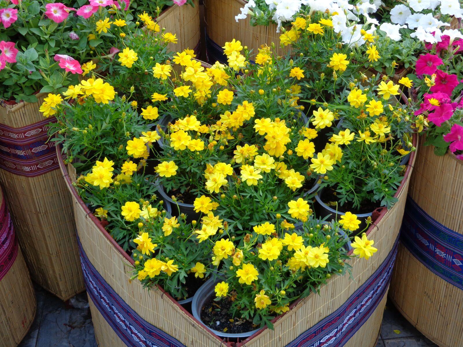 "Sony DSC-W690 sample photo. ""Flowers, yellow, vietnam"" photography"
