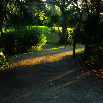 nature, sunset, Canon EOS REBEL T5I