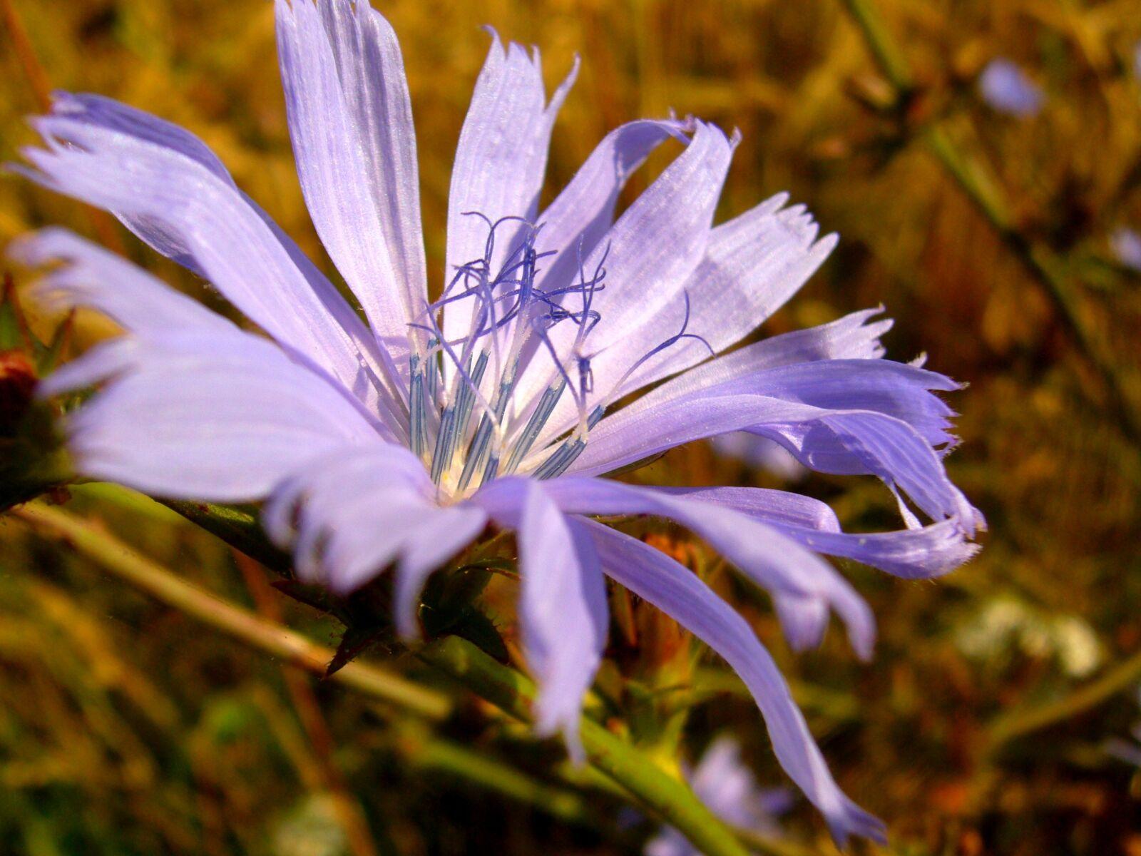 wildflower, flower, nature