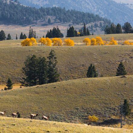 elk herd, landscape, scenic, Canon EOS 5D MARK III