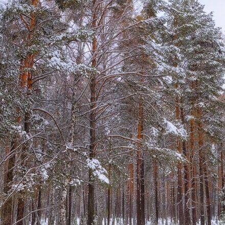 forest, snow, winter, Pentax K-500