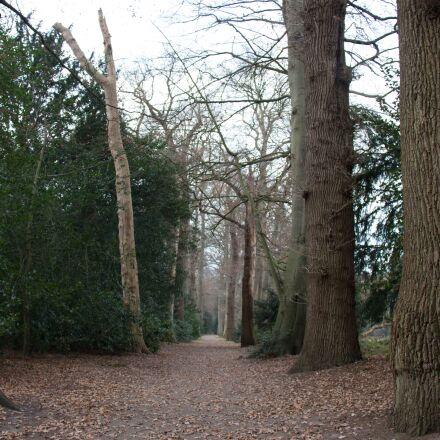 forest, nature, autumn, Canon EOS 700D