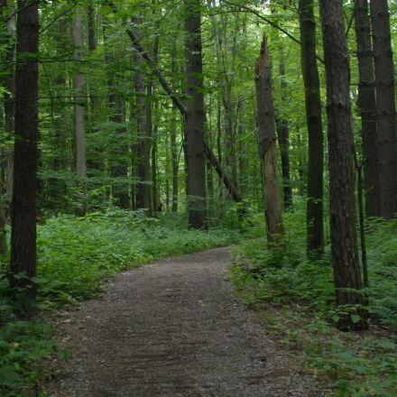 forest, reflection, sun, trail, Nikon D200