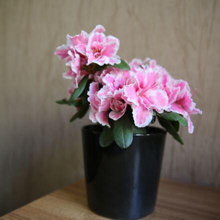 flowers, patern, backround, Canon EOS 5D MARK III