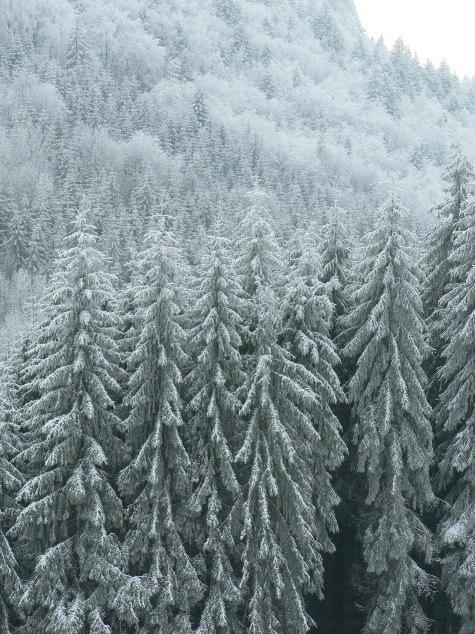 frost, winter, nature