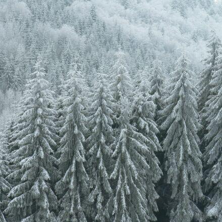 frost, winter, nature, Panasonic DMC-FZ5