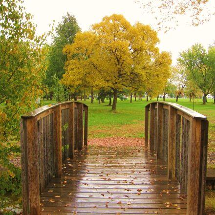 park, autumn, tree, Canon POWERSHOT SD880 IS