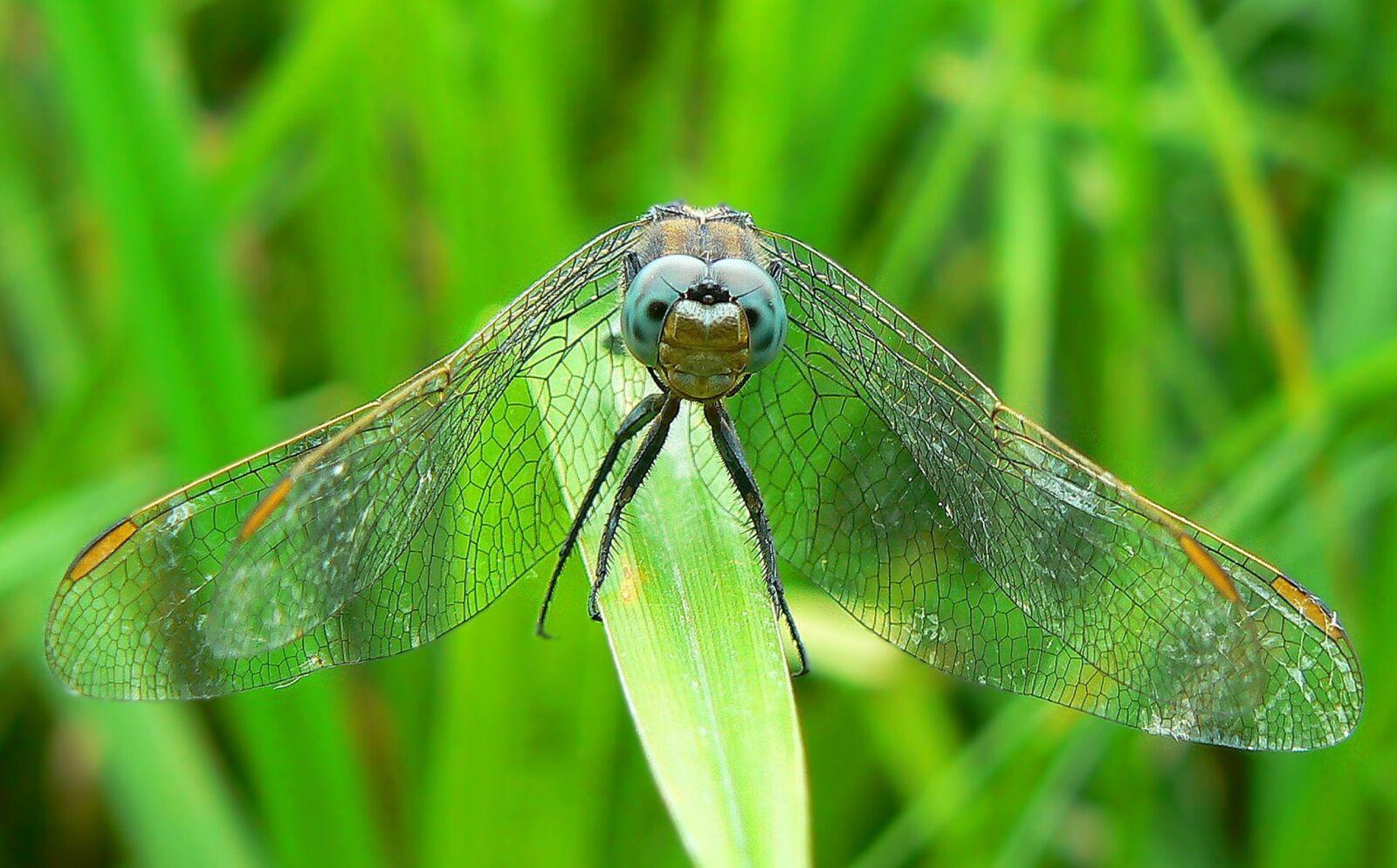 "Panasonic DMC-FZ7 sample photo. ""Nature, grass, insect"" photography"