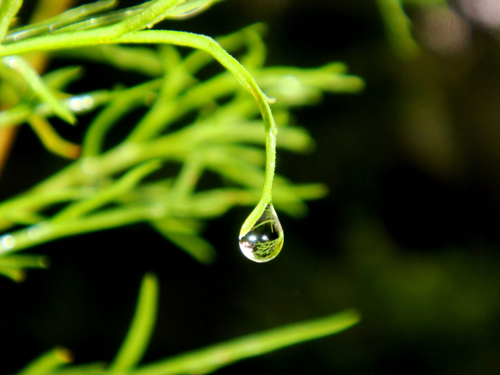 dew drops, water, drip