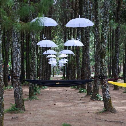 umbrella, forest, rumah kayu, Nikon 1 J5