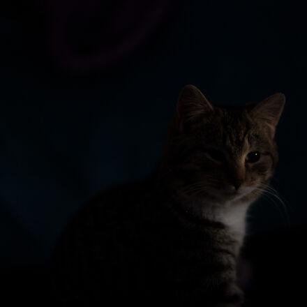 cat, dark, Canon EOS 5D MARK II
