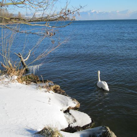 landscape, swan, snow, Canon POWERSHOT A3150 IS