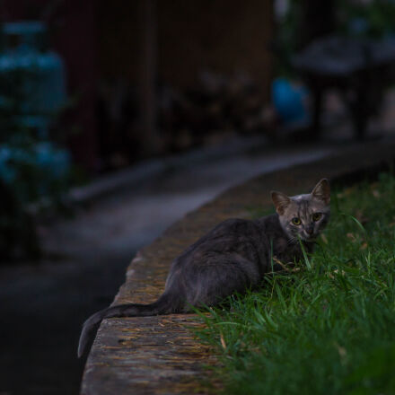 black, tabby, cat, on, Sony SLT-A58