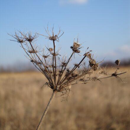 meadow plant, winter, nature, Sony DSC-W210
