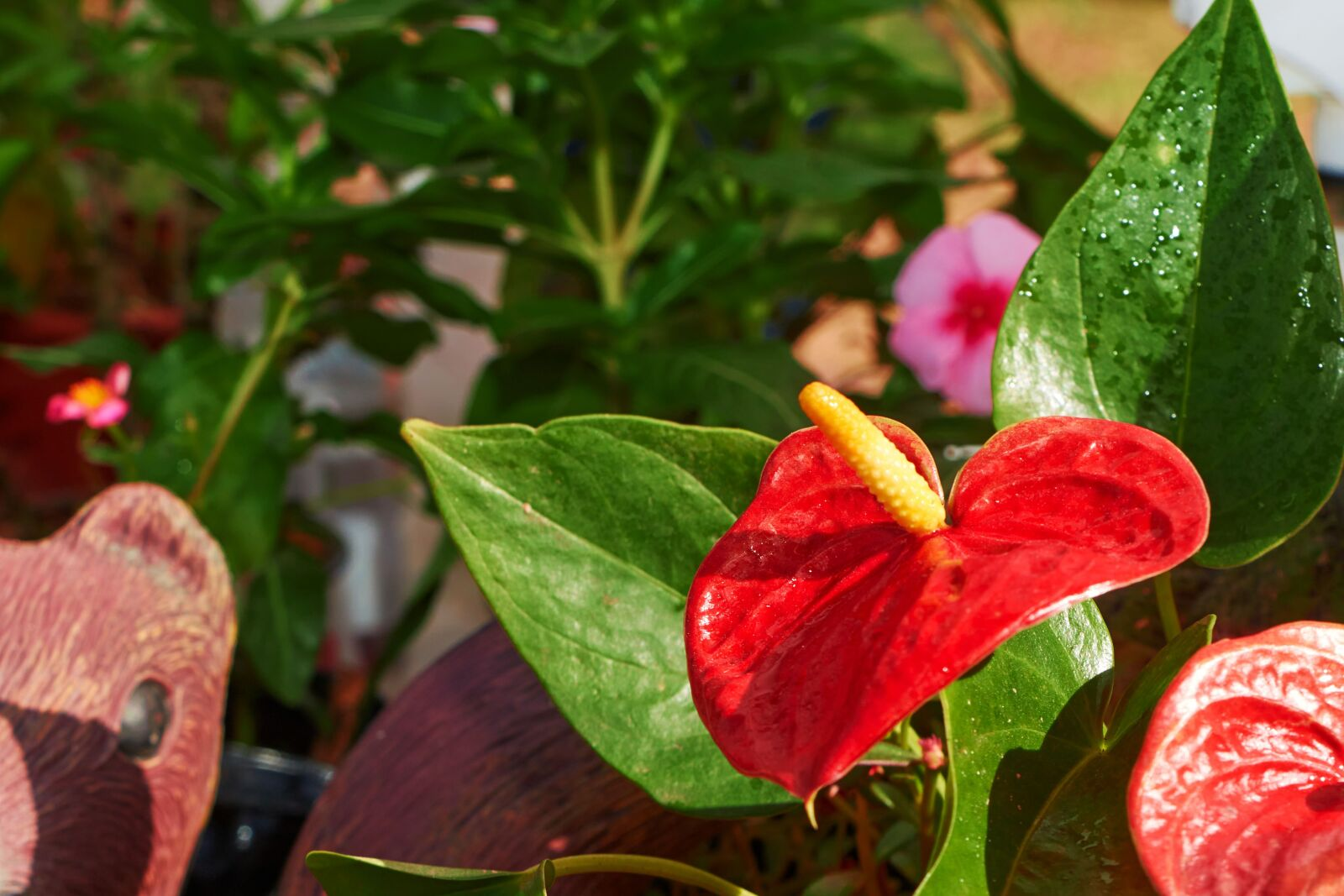 """Canon EOS 70D sample photo. """"Flowers, nature, flower"""" photography"""