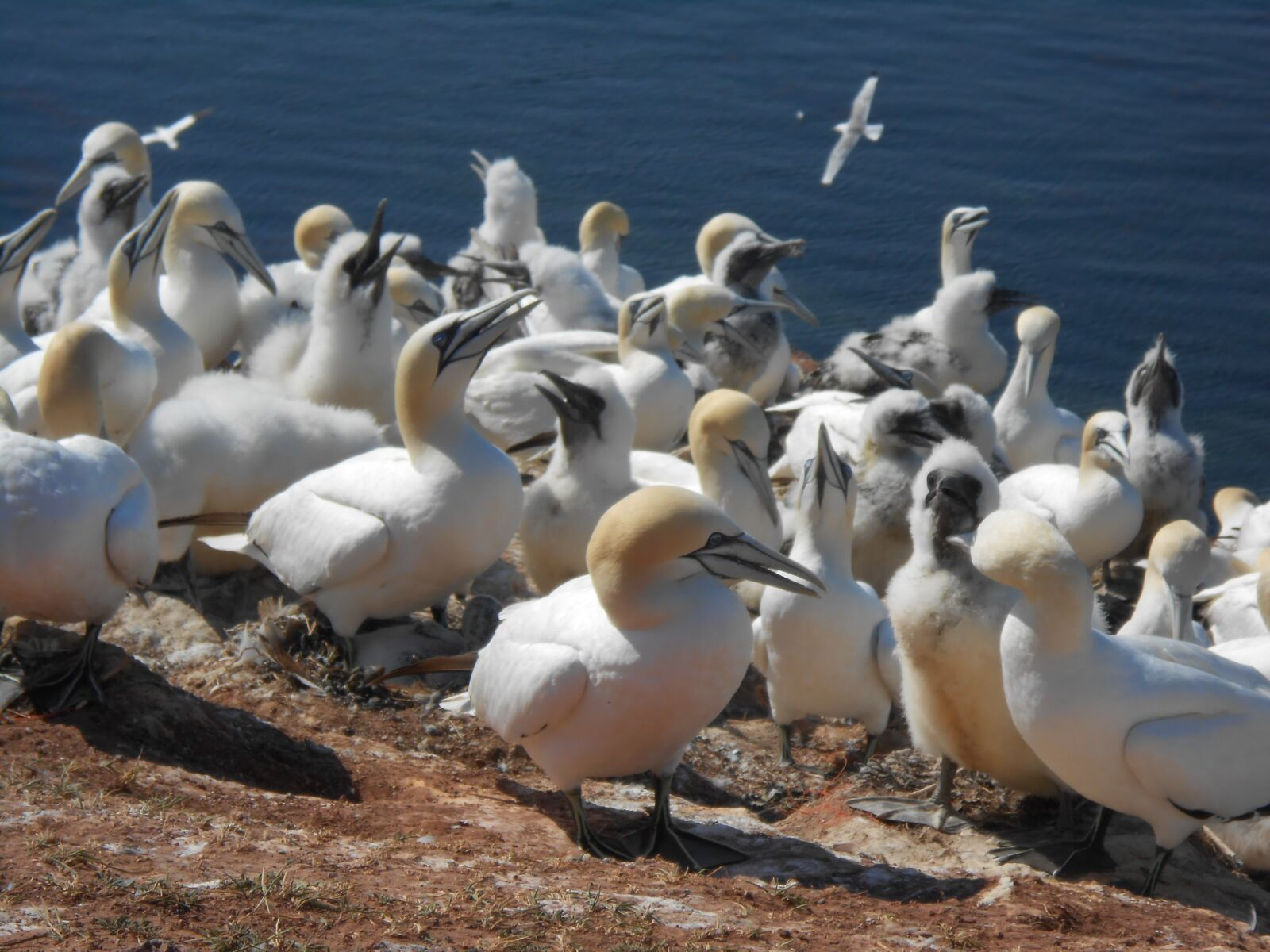 "Nikon Coolpix S4300 sample photo. ""Bird, animal world, waters"" photography"