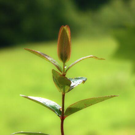 plant, leaf, green, Panasonic DMC-TZ40