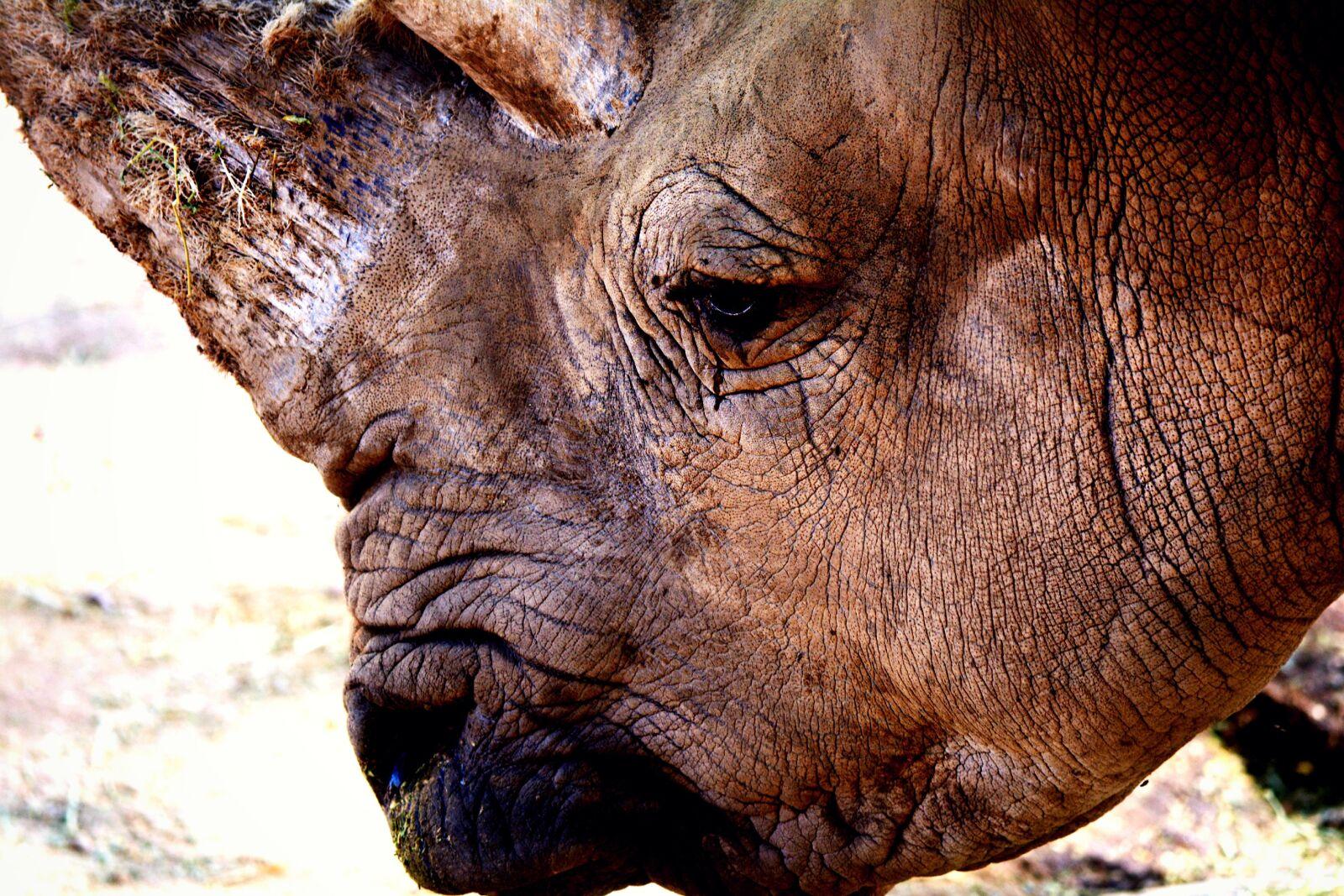 "Nikon D5200 sample photo. ""Brown, horn, horns, outofafrica"" photography"