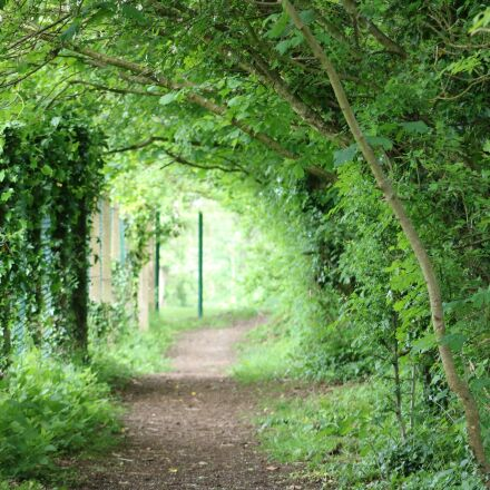 tunnel, green, foliage, Canon EOS 750D